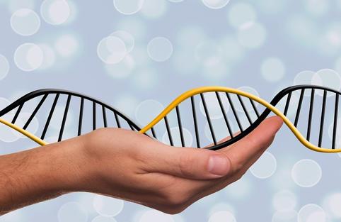 Use of useless DNA