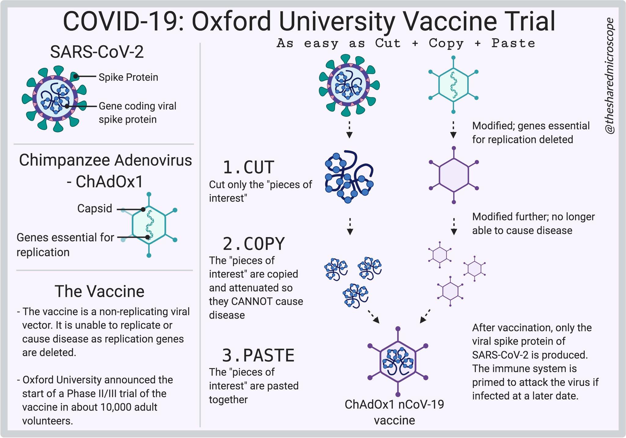 옥스퍼드/아스트레제네커 백신 임상 3상 보류, 무엇이 문제인가?