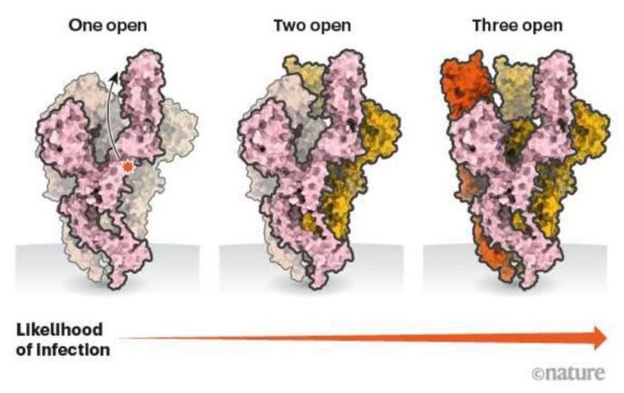 코로나바이러스의 변이 심층 분석