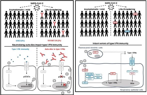 인터페론: 중증 COVID-19의 14%에서 발견된 면역의 약점