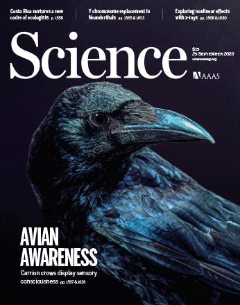 이번 주 Science 커버스토리: 새의 의식(意識)을 얕잡아 보지 마라