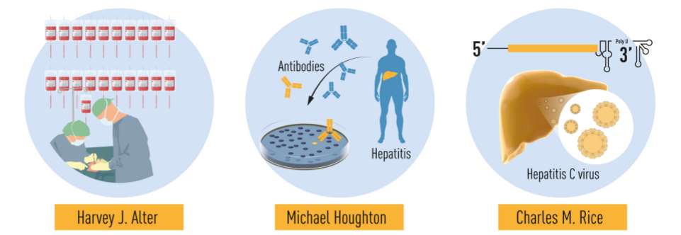 HCV 발견 과정