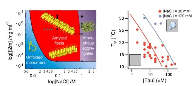 왼쪽 상다이어그램(phase diagram)은 이영호 박사가 고안한 그림으로 여러 환경조건에 따른 단백질의 상거동과 응집상태를 도해적으로 알기 쉽게 보여줌