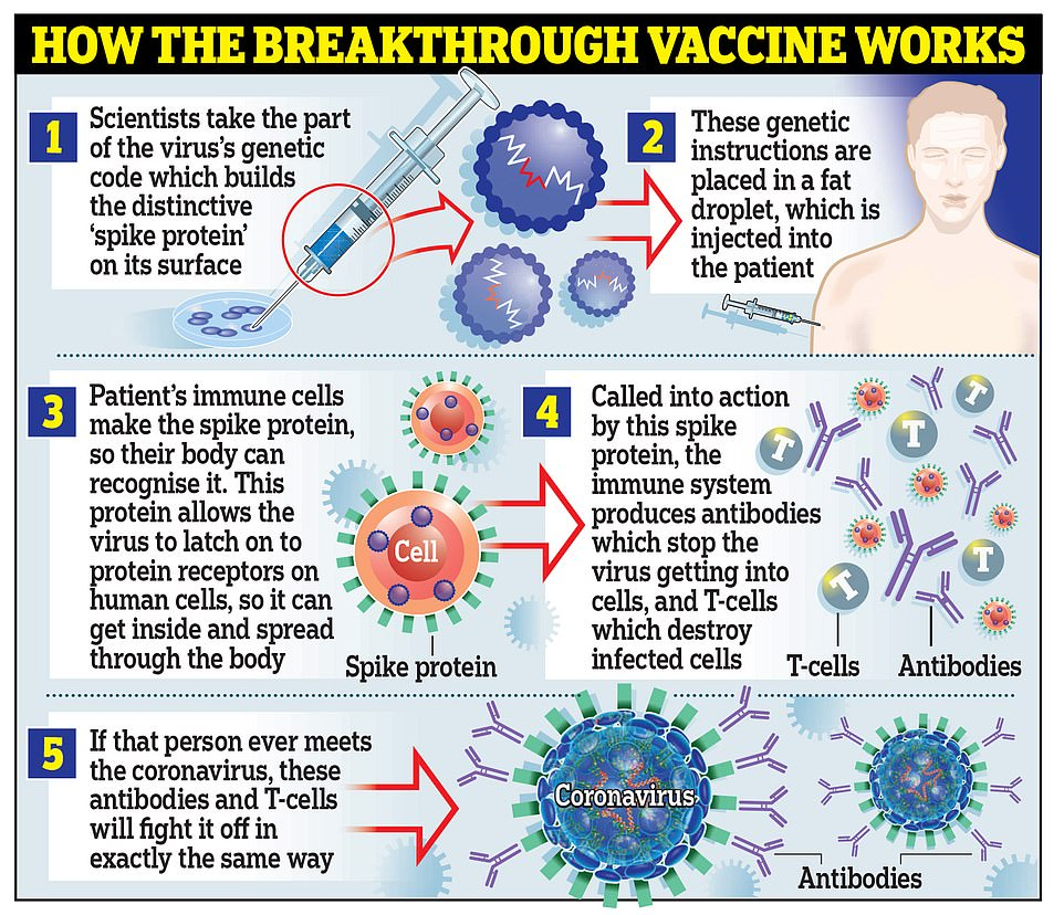 >Moderna's vaccine works in the same way as the one developed by Pfizer and BioNTech, by using genetic material called RNA from the coronavirus to trick the body into making the 'spike' proteins that the virus uses to latch onto cells inside the body