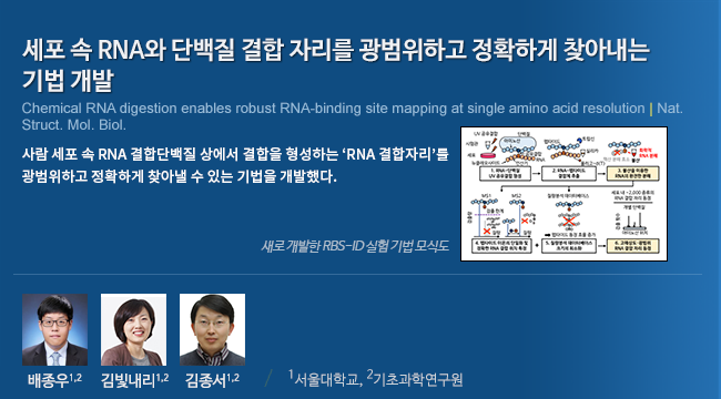 세포 속 RNA와 단백질 결합 자리를 광범위하고 정확하게 찾아내는 기법 개발