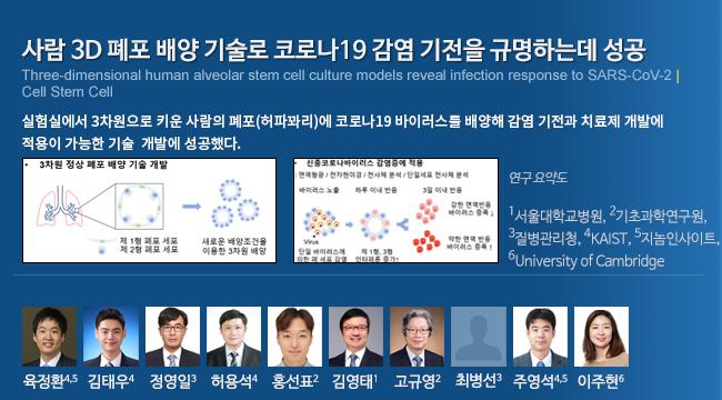 사람 3D 폐포 배양 기술로 코로나19 감염 기전을 규명하는데 성공