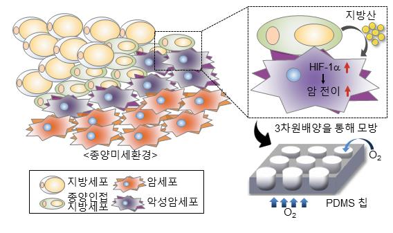 지방산-저산소유도인자 신호전달 체계 개념도 및 3차원 암미세환경 모델