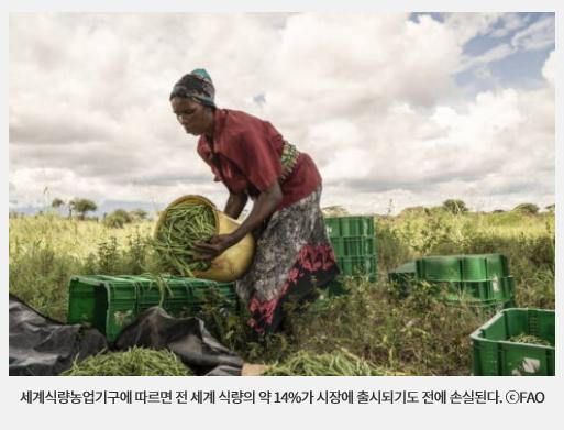 세계식량농업기구에 따르면 전 세계 식량의 약 14%가 시장에 출시되기도 전에 손실된다