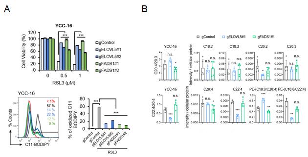 ELOVL5 또는 FADS1 유전자는 페롭토시스에 필수적인 역할을 함