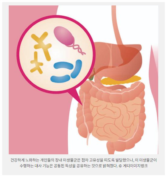 건강하게 노화하는 개인들의 장내 미생물군은 점차 고유성을 띠도록 발달했으나, 이 미생물군이 수행하는 대사 기능은 공통된 특성을 공유하는 것으로 밝혀졌다