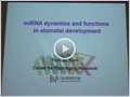 miRNA dynamics and stomatal development
